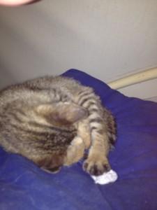 Katze unter Sprayhood